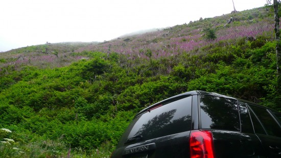 Foxglove Fields: Logging road, Hwy 101