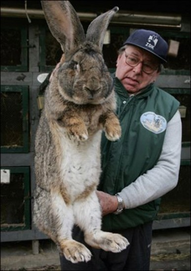 Big Easter Bunny